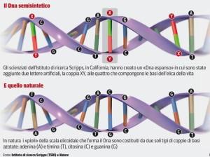 codice genetico espanso